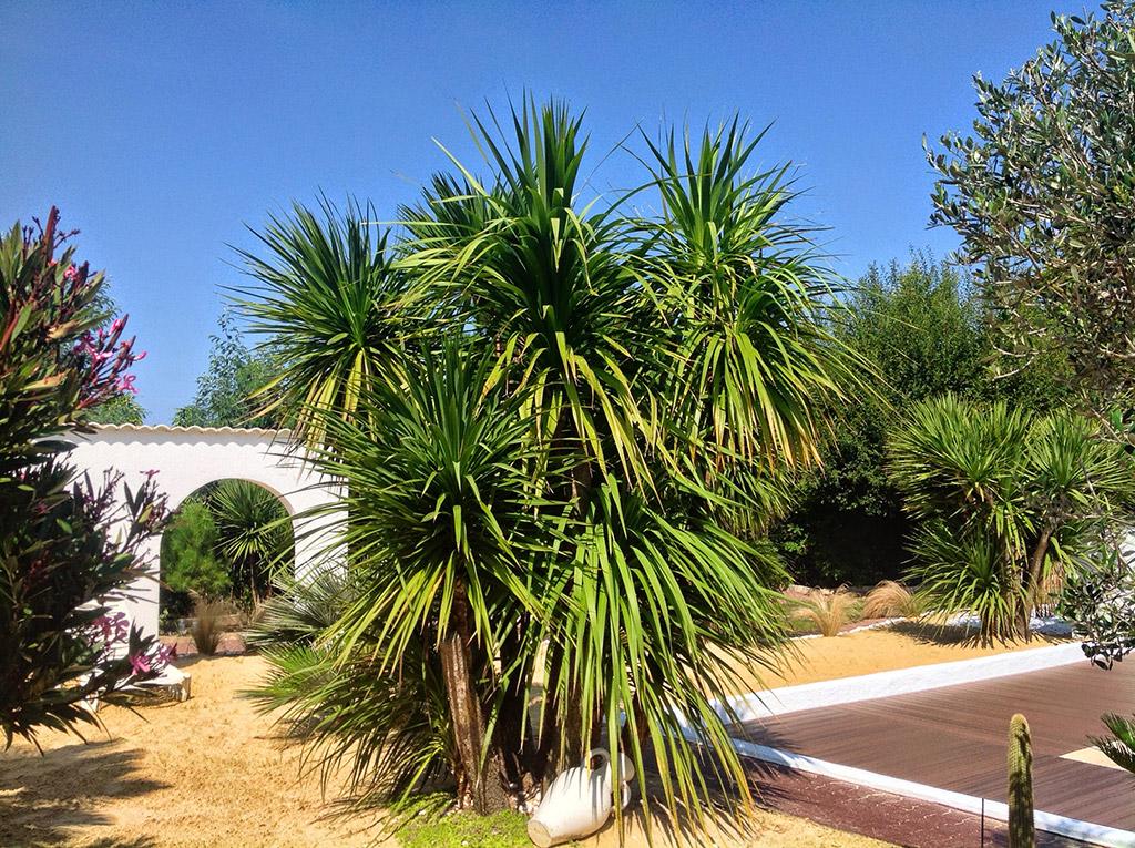 plante yucca exterieur zoom sur le yucca d couvrez tout